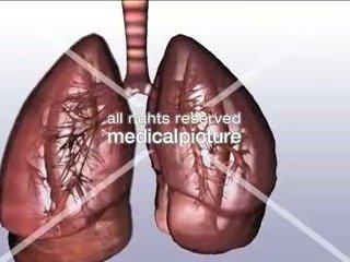 肺的解剖动画