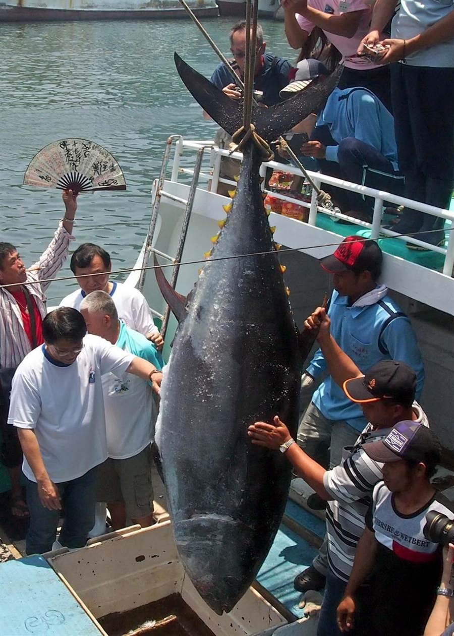 台湾渔民在屏东东港捕捞黑鲔鱼(蓝鳍金枪鱼) 图源:中国时报