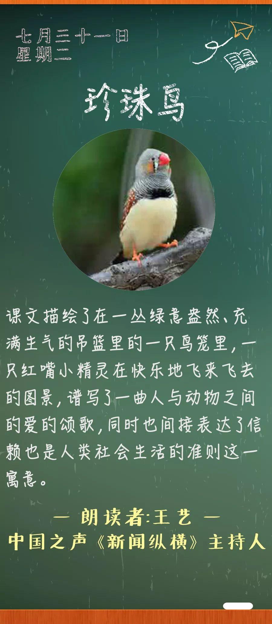 《珍珠鸟》丨那些年,我们一起读过的课文