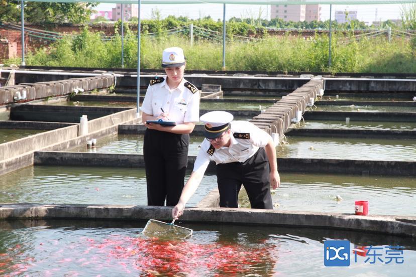 东莞海关助力观赏鱼顺畅出口,今年前8月验放22.5万条