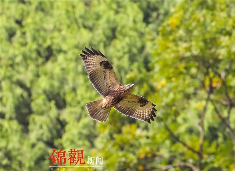 nba篮球外围分析网,中国唯一高原湿地:淡季门票仅旺季三分之一,现在去立省140元