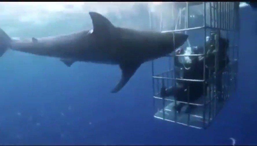 国外发生件离奇事故;有一条鲨鱼想疯狂攻击潜水员,却被笼子卡住