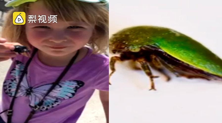 :亮绿色的角蝉,以自己名字命名