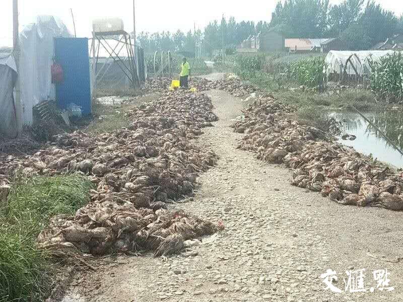 """江苏191万亩农田、53.9万亩园艺作物因台风""""温比亚""""受淹"""