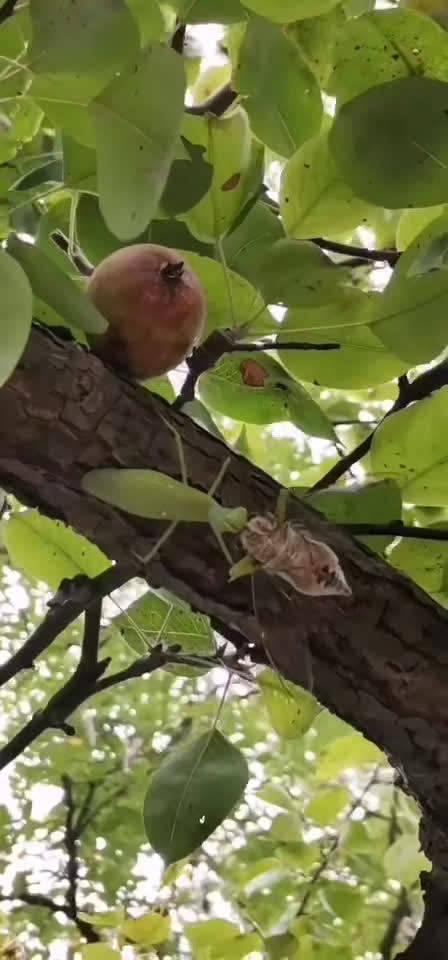 网友:螳螂捕蝉,黄雀在后!