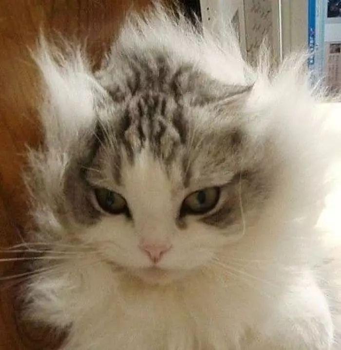"""小卷烫发,很容易炸毛变成""""金毛狮王"""",所以在做头型前发型还是先打薄喔几个月建议睡宝宝图片"""