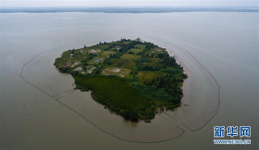东寨港国家级自然保护区红树林面积扩大至1771公顷