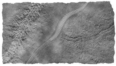 发现一条5.5亿年前的夷陵虫 揭示动物早期演化史的巨大飞跃