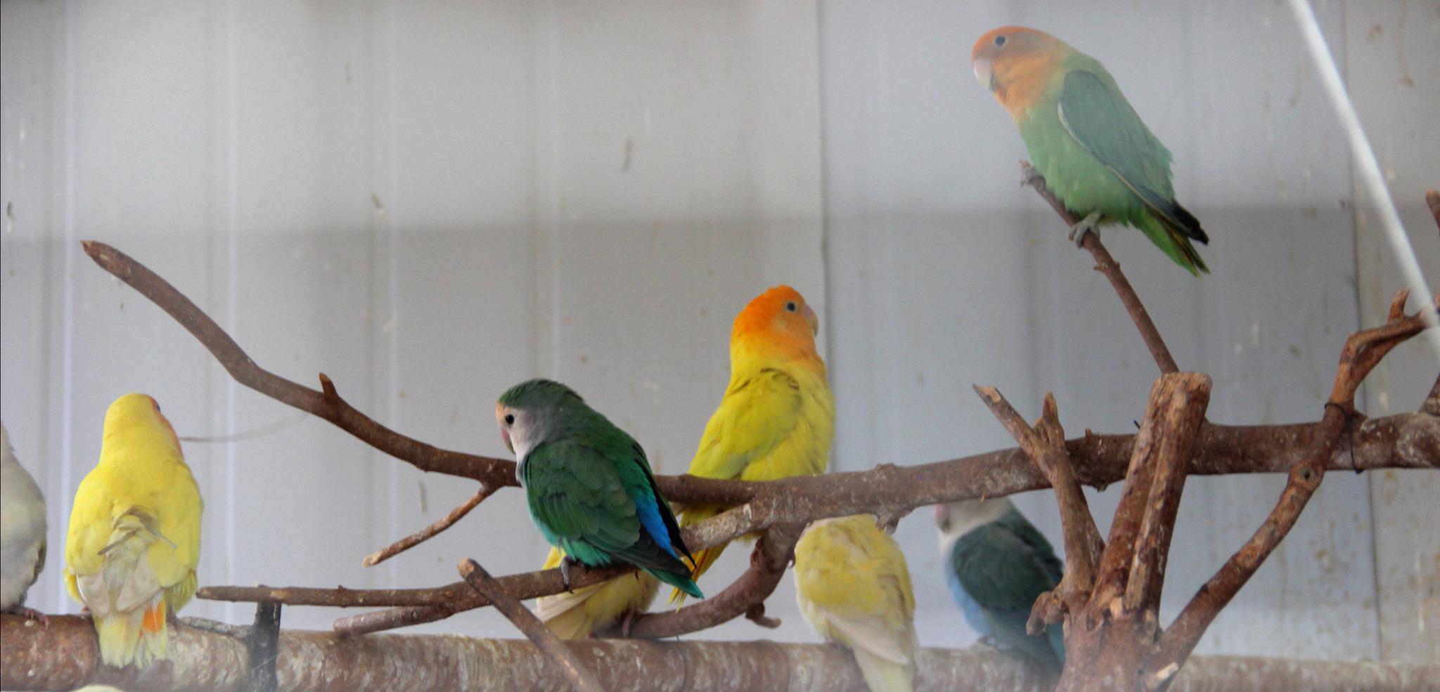 网购鹦鹉构成严重犯罪 这些野生动物碰不得图片