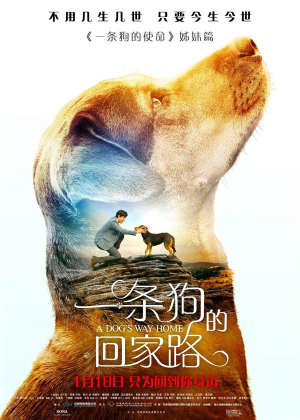 """《一条狗的回家路》曝""""寻狗启事""""预告"""