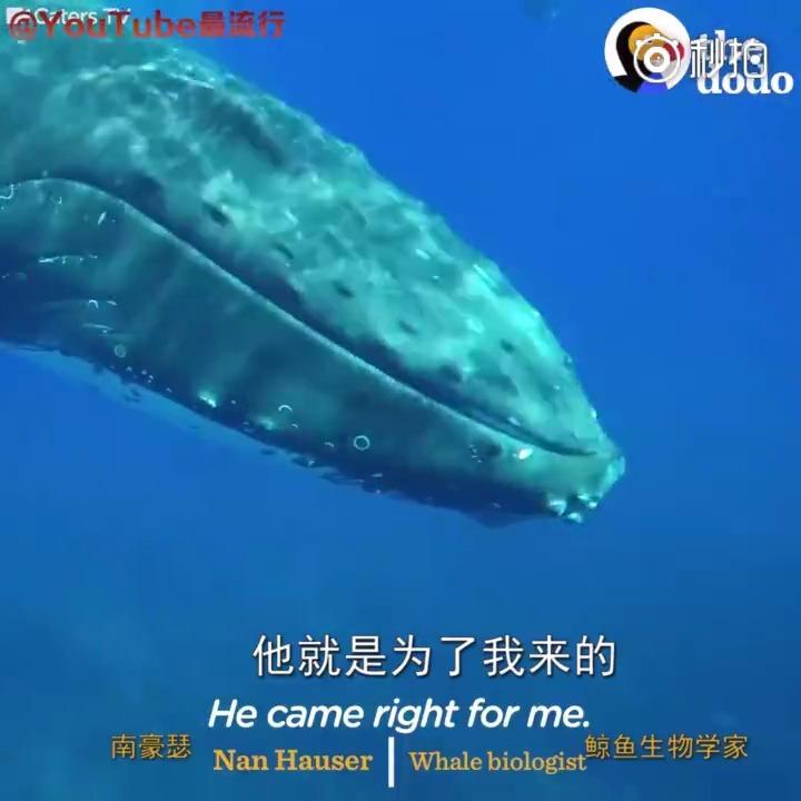 感动!鲸鱼全力把科学家推出海面 助其躲过鲨鱼