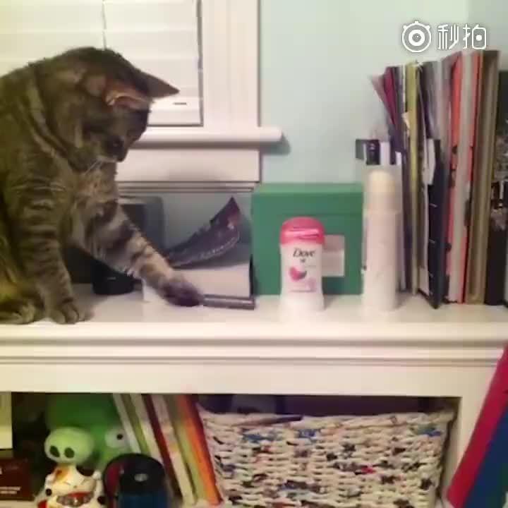 那些年很坏坏的小猫咪视频合集,你看的出它们也很皮的吗?