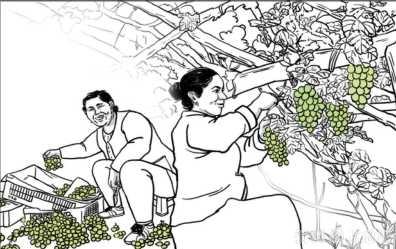 【报告总书记 脱贫有信心】阿图什的葡萄,变了