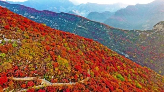 一个小山村的红叶传奇:第八届坡峰岭红叶节门票收入创新高