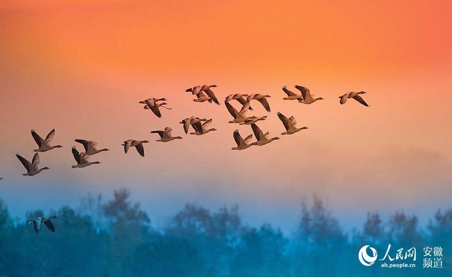 """安徽霍山:美丽风景变""""美丽经济"""""""