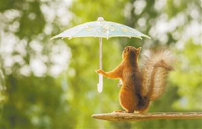 梅雨季来临 看看这些动物的躲雨 神器