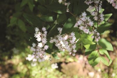 """植物园""""爱情隧道""""即将花繁叶茂"""