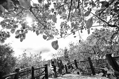 北京今年推出21处彩叶观赏景区