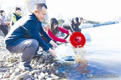 吉林市开展松花江水生生物增殖放流活 24万尾鱼苗游进母亲河