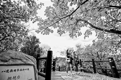 赏缤纷彩叶 去这16处公园景区