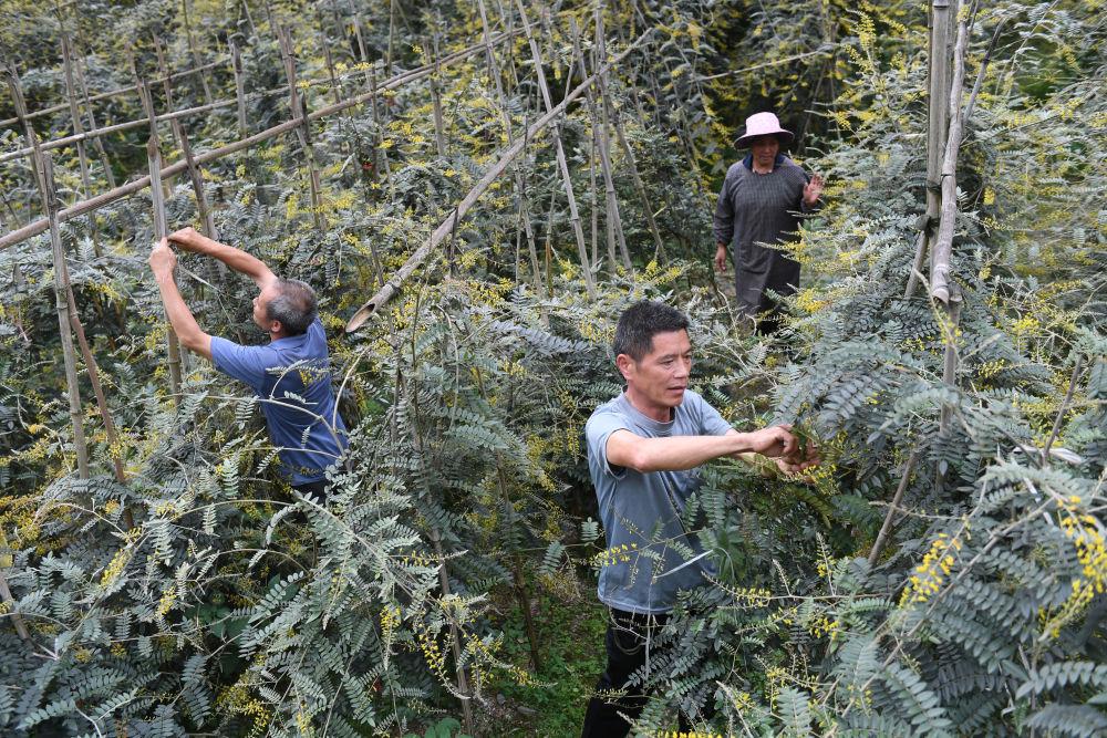 小康路上一个都不能少——环江毛南族脱贫攻坚的绿色力量图片