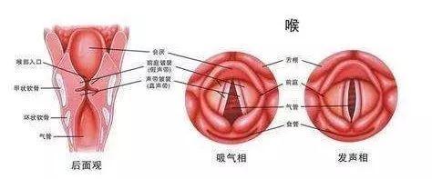 【医生说】不可小视的儿科急症——急性喉炎