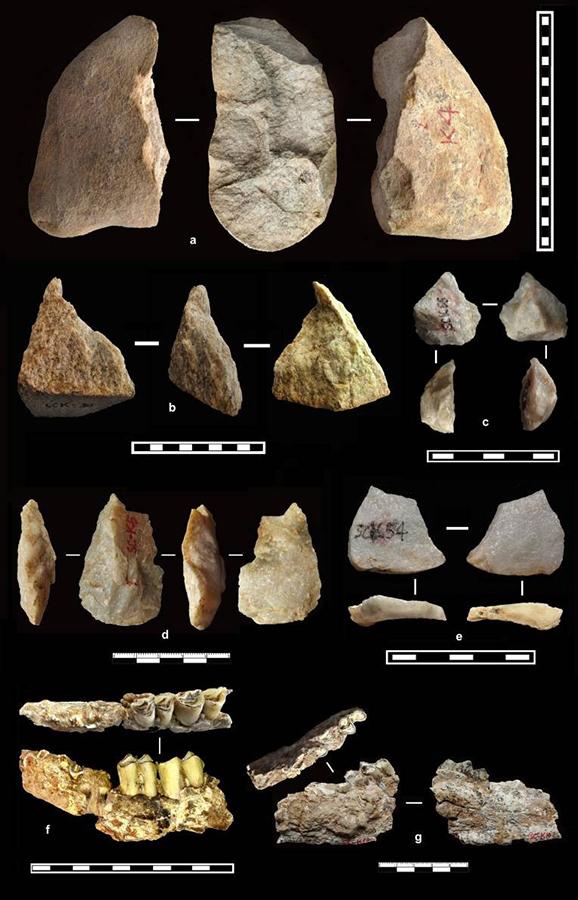 遗址出土的部分石器与化石。