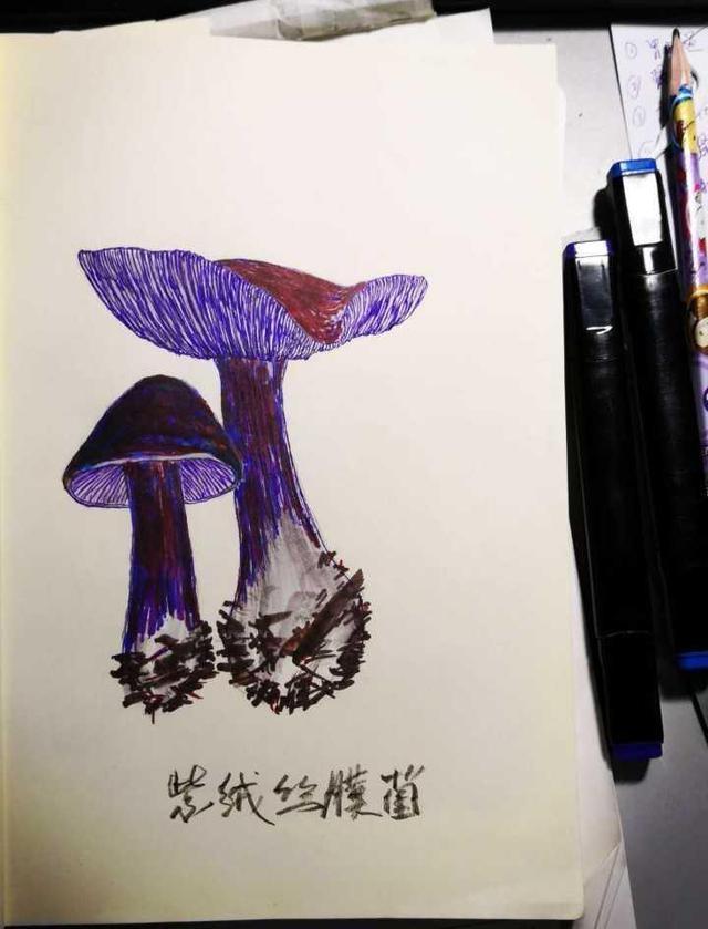 浙大老师手绘蘑菇图 教你蘑菇认知的五大误区