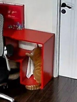 没人擦的电视柜突然变干净了,主人调监控发现,这吓尿一幕!