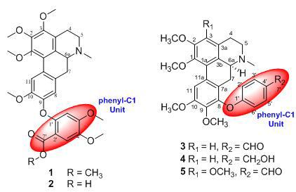 昆明植物所在新颖异喹啉生物碱结构及药理活性研究中获系列进展