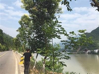 甘肃男子驾车坠水身亡 平安人寿拒赔2400万元