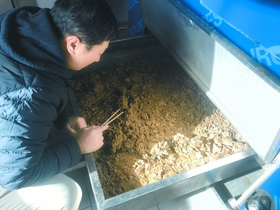 养水虻和蚯蚓 吃垃圾变肥料