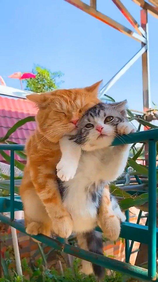 你们两只小猫咪喵星人的萌宠暖心都在你们这了