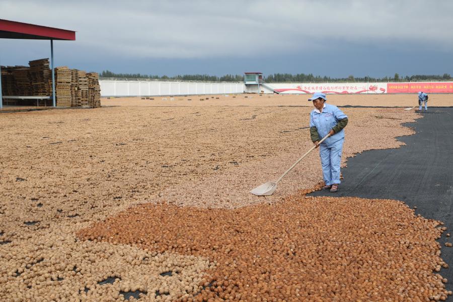 库车县:林果合作社带动农民增收