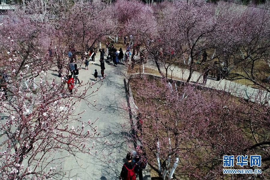 92岁老人抗美援朝纪念章丢失 颐和园呼吁游客提供信息