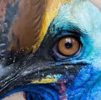 鸟类能否被认为是真正的恐龙?是的!