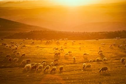 《出塞书》:他像是心怀天问的行者,踽踽独行于辽远苍茫的西北旷野