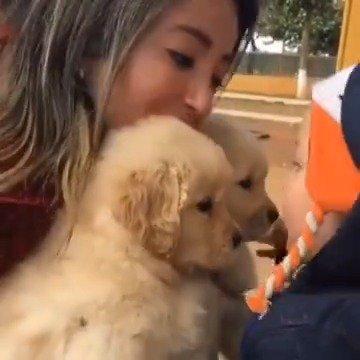 小狗狗和小宝贝的第一次见面,麻麻耐心教小宝贝和小狗狗友好相处