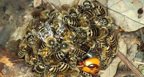 同程蛇470_251动物式双管章鱼图片