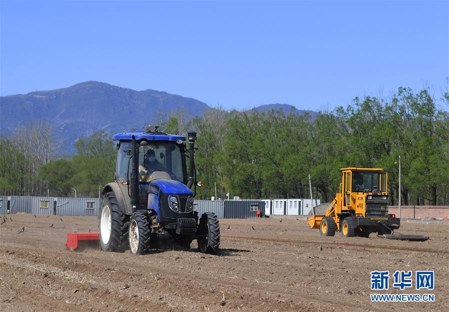 北京海淀: 百余亩油菜花田开始播种