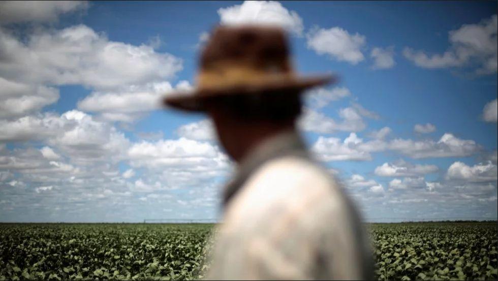 看到中国的这个巨大商机后 巴西农户把甘蔗都砍了