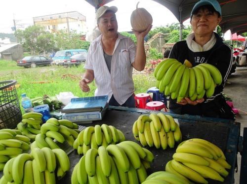 恒春半岛不适合种香蕉?台湾夫妇获香蕉丰收