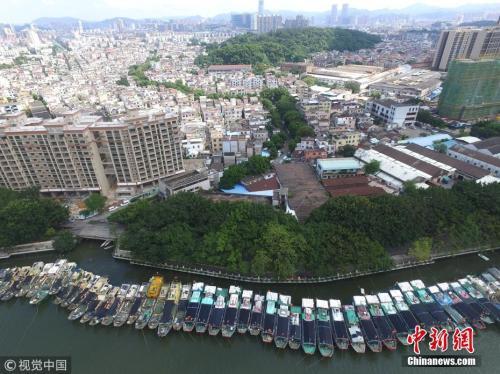 """台风""""山竹""""正在逼近,广东中山市石岐河张溪段,大量渔船回港避风。图片来源:视觉中国"""
