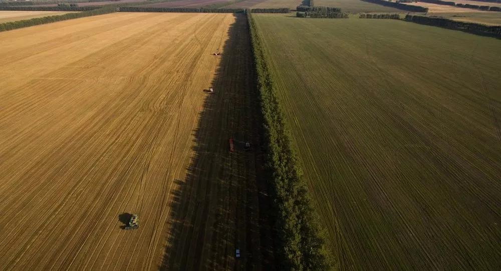 ▲去年中國哈爾濱東金集團在哈巴羅夫斯克邊疆區租種農田。(俄羅斯衛星通訊社)