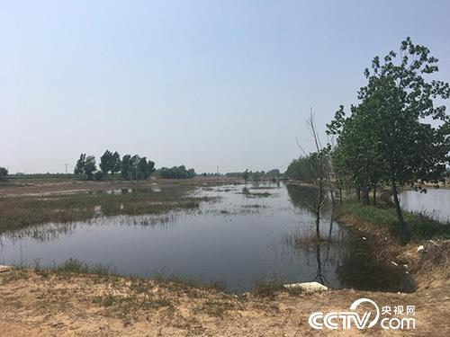 河北省晋州市滹沱河排污口附近形成巨大的蓄水坑,坑内的水呈现黑色。央视网 图
