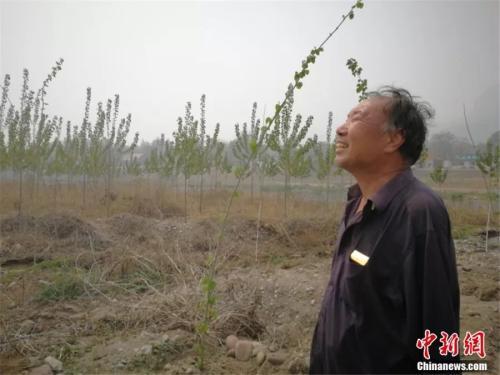贾文其还在河梯地上种了数千棵杨树。李晓伟摄