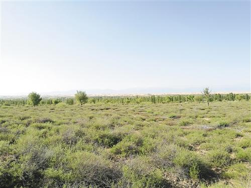 右上图 经过多年的生态修复,库布其沙漠年降水量由过去不足100毫米增加到300毫米以上,地下水位显著提升,沙漠开始变绿洲。本报记者 黄俊毅摄