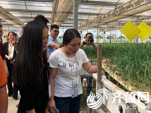 诚现代农业科技示范园 打造滨洲田园综合体样