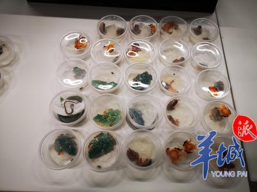 蜗牛、蜥蜴……入境旅客行李箱里发现数十个塑料盒