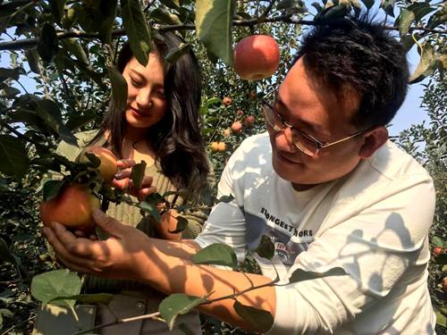 原创「相亲看点」苏鲁单身青年男女情定苹果园